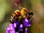 Cientistas indicam que abelhas podem enxergar melhor do que se pensava