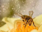 Comunicação entre apicultores e agricultores ajuda na aplicação de boas práticas