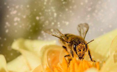 XI Simpósio Internacional sobre Polinização aborda relação plantas-polinizadores