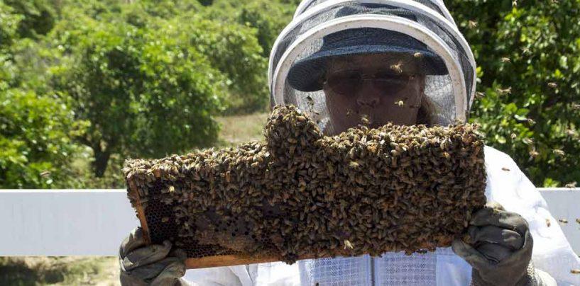 22 de maio – Dia do Apicultor e Dia Internacional da Biodiversidade