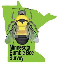 minnesota bumblebee survey