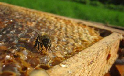 Melhor manejo, maior produtividade de mel