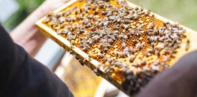 Mapa da flora vai orientar apicultores no Nordeste