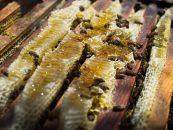 Produção de mel gera empregos e movimenta a economia do Norte de Minas