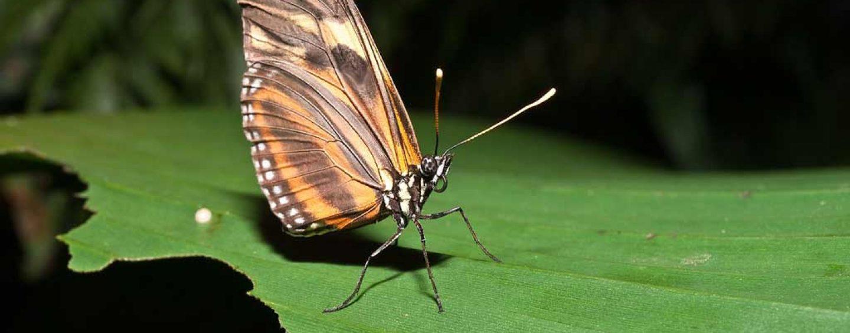 Parques em São Paulo têm mais de 400 espécies de borboletas identificadas