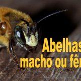 Videocast #2 – Abelhas são macho ou fêmea?