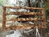 Exportações nordestinas de mel alcançam 5,3 mil toneladas