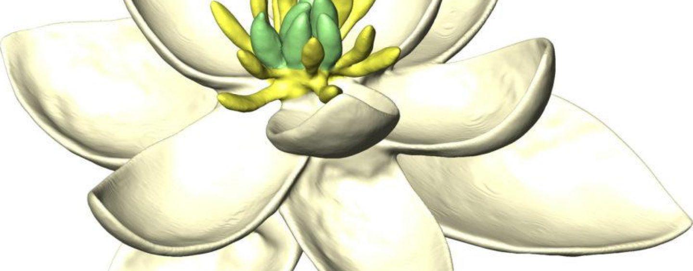 Flores modernas derivaram de um único ancestral