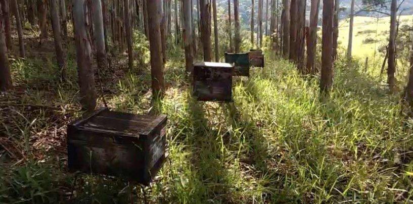 10 dicas para manejo de apiários