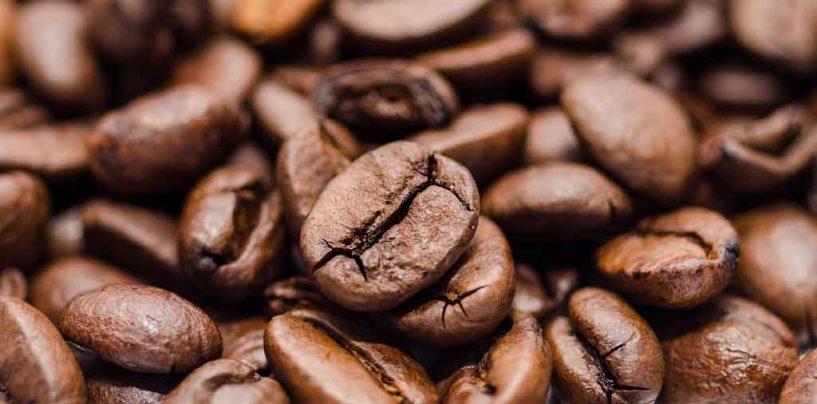 Aquecimento global põe em risco a produção de café latino-americana