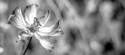 Mudanças climáticas ameaçam sobrevivência das abelhas