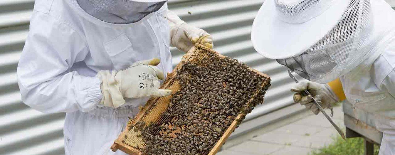 Valença (Bahia) recebe curso gratuito de apicultura