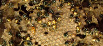 Estudos desvendam a linguagem química dos insetos