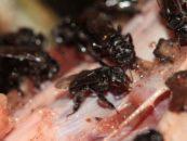 Videocast #3 – O que as abelhas comem?