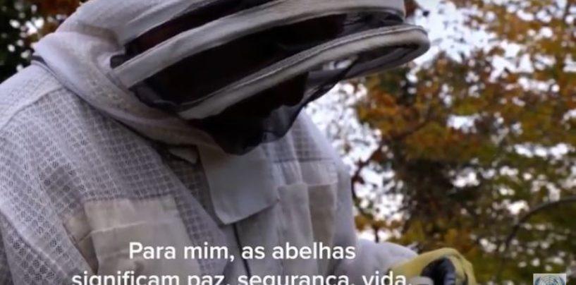 Refugiado sírio retoma a vida dando aulas de apicultura