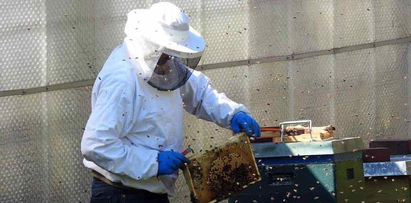 Seagro Tocantins participa de ciclo de palestras sobre abelhas