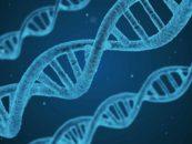 Earth Biogenome pretende sequenciar o DNA de todas as espécies vivas do planeta