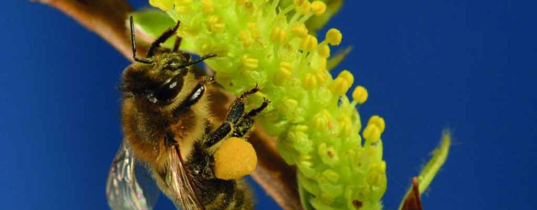 ONU declara 20 de maio Dia Mundial das Abelhas