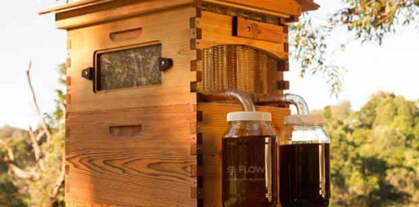 Crowdfunding no mundo das abelhas