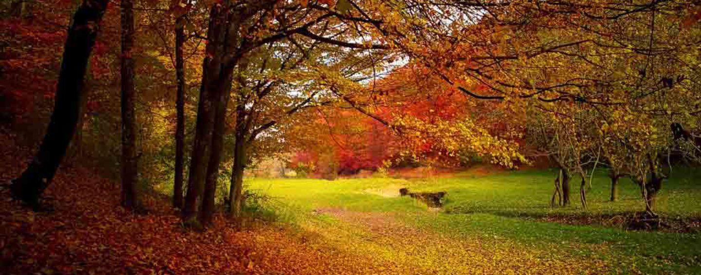 Já é outono!