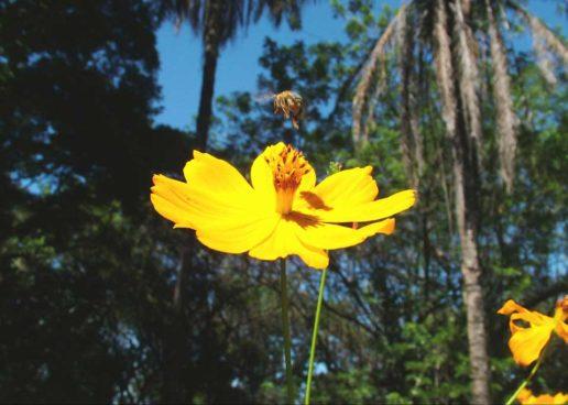 Dia da Biodiversidade – Mais informação e ciência para ajudar as abelhas e o planeta