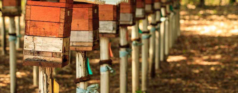 Instituto Peabiru realizará simpósio sobre abelhas sem ferrão