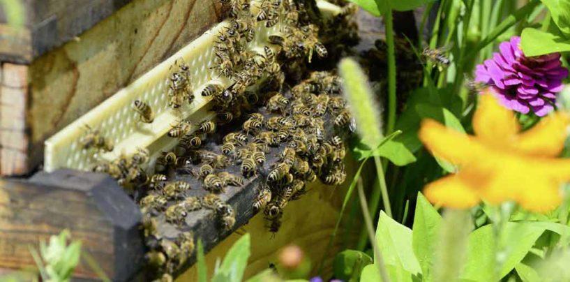 Filapi 2018 – Congresso no Uruguai debate a apicultura sustentável