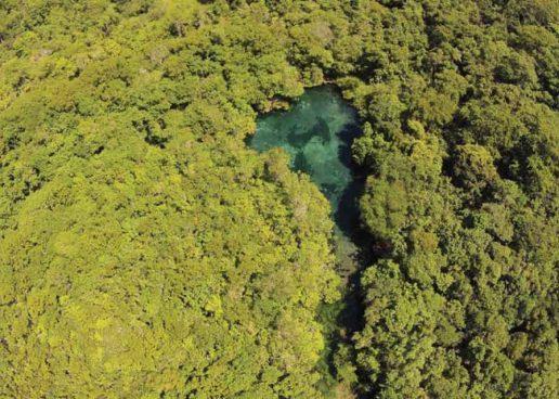 Biodiversidade é estratégica para o Brasil