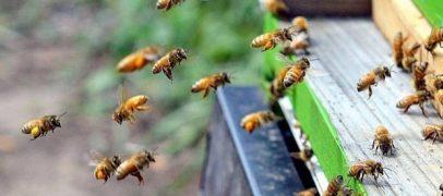 Colmeias inteligentes ajudam na conservação de abelhas