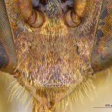 Sistema de Informação sobre Abelhas Neotropicais recebe novo acervo