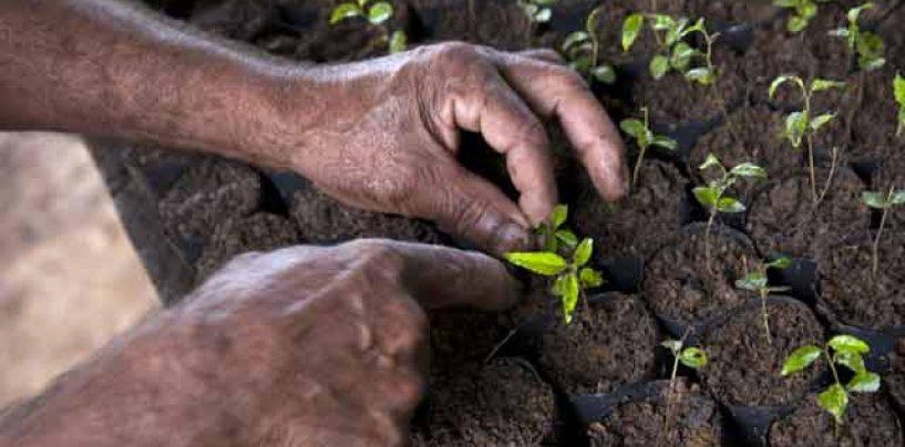 Projeto quer plantar 1 bilhão de árvores no Brasil até 2030