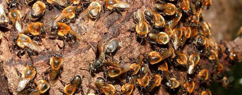 Unesp Rio Claro e UFSCar realizam evento sobre toxicidade em abelhas sem ferrão