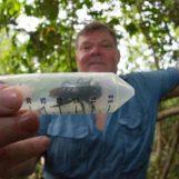 Maior abelha do mundo é redescoberta na Indonésia