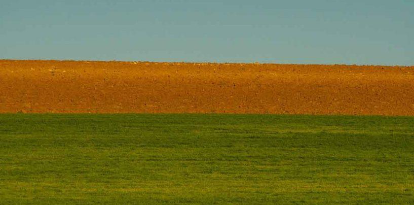 FAO alerta que desaparecimento da biodiversidade ameaça agricultura