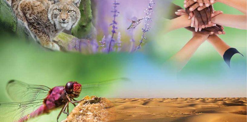 IPBES 7 – Um milhão de espécies de plantas e animais estão ameaçadas de extinção